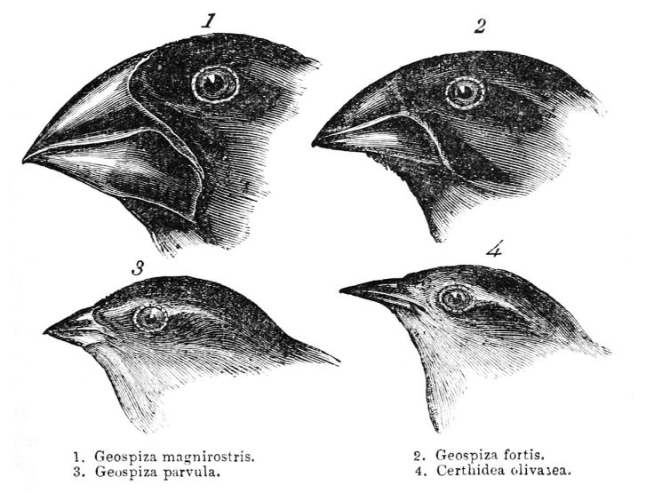 Darwin's Finches (Alamy)